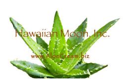 Hawaiian Moon Insurance